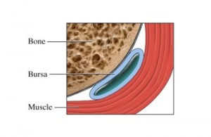 Bursa Sac between bone and muscle
